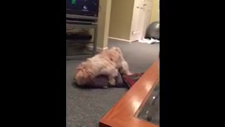 A Dog and Her Pillow - Video
