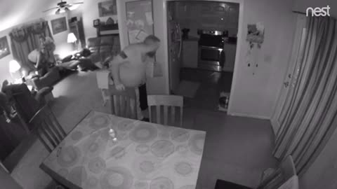 Raccoon Goes Rogue And Runs Inside House