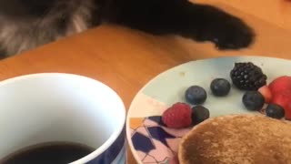 Cat Trying to Steal Food