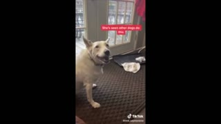 Deaf dog thinks he is barking.