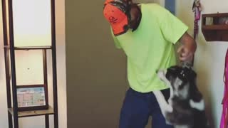 Ellie Sky the husky gets super excited to see her dad