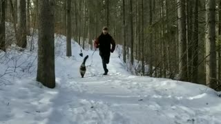 Jogger takes cat on leash out for snowy run