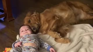 Sweet moment captured on camera between dog and baby