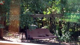 Squirrel Interrupted Enjoying Backyard Swing - Video