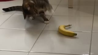 It's safe to say that this cat doesn't like bananas