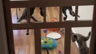 cats pretend to be cats in the house & new spider man cats