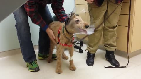 Poor Dog Has Been Blind For Years, But Watch When He Finally Gets To See His Loving Family