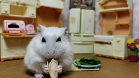 Stubborn hamster refuses salad, demands treats instead