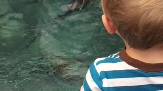 Baby freaks out over otters - Video