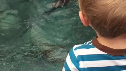 Baby freaks out over otters