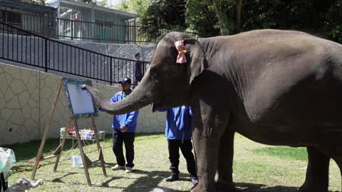 Yumeka, the painting elephant