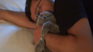 Cat Enjoys The Warm Bear Hugs Of His Owner