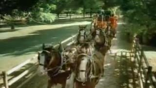 Budweiser – Clydesdales Donkey - Video