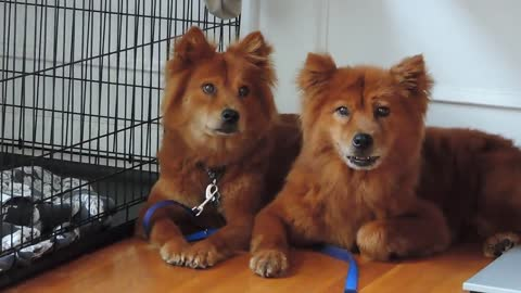 "Mother & Daughter ""Twin"" Dogs Rescued Off Chain Do EVERYTHING Alike"