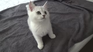 Adorable little kitten loves playing with owner - Video