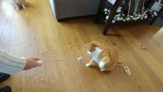 Speed Boxing Cat  - Video
