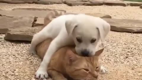 Best buddies for life