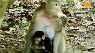 Mother love only small baby than big baby monkey