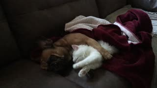 Puppy and kitten are already best friends - Video