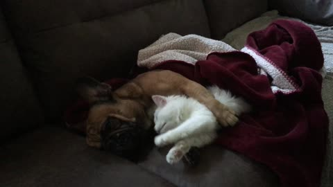 Puppy and kitten are already best friends