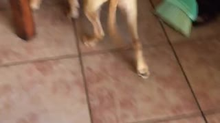 Dog gets in trouble and hides under sister  - Video