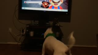 Dog Afraid Of Mario  - Video