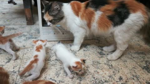 Mother Cleans Out Perfect Kitty