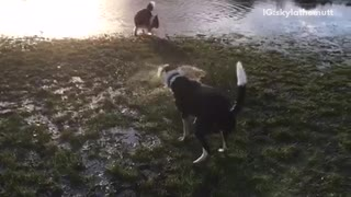 Black dog shaking off water in slow motion