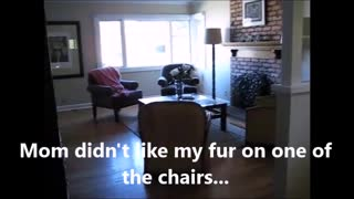 A Cat Dealing With Cat Fur  - Video
