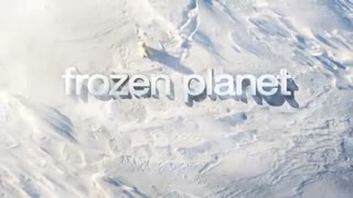 Frozen Planet: Least Weasel