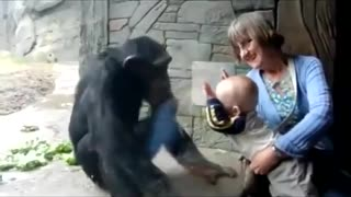 Incredible funny baby playing with gorilla