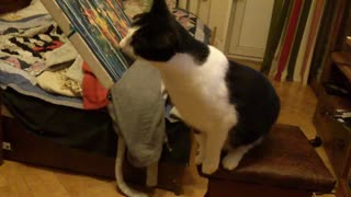 Keaton The Cat Has A Nose For Good Art - Video