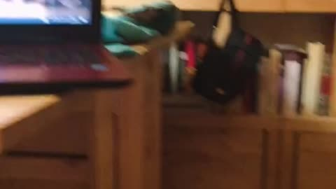 Cat rolling on top of laptop ends in epic fail