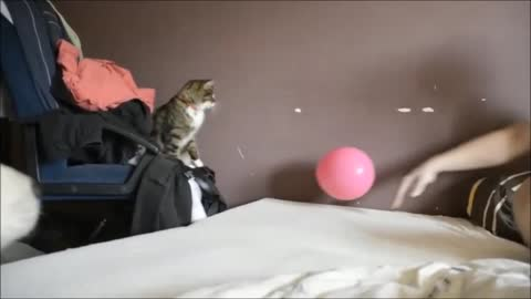 Kitten adorably plays catch with a balloon
