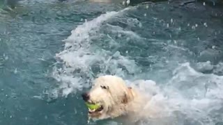 fun Labradoodle  - Video