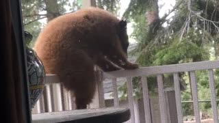 Curious Bear Cub on the Porch