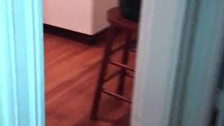 Grey cat in kitchen has haunting eyes  - Video