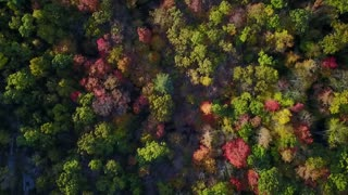 Colorful Forest from High Above - Video