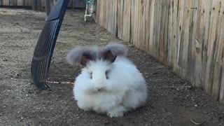 Fluffy rabbit slow motion spazzes out