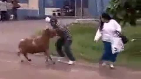 Goat hit the women & fight with man