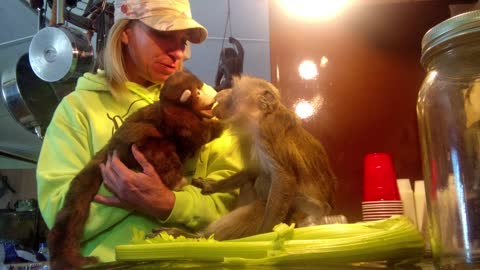 Monkey Lovingly Befriends A Monkey Puppet