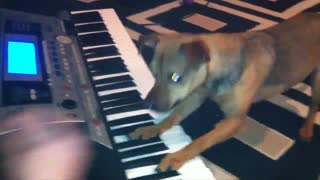 Dog Plays Keyboard - Video