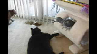 Grey Parrot Sternly Tells Playful Cat To Stop It - Video