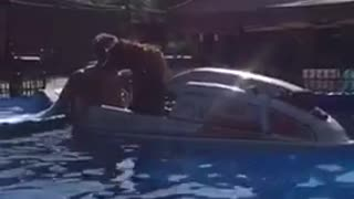 Dog on a jetski inside a pool