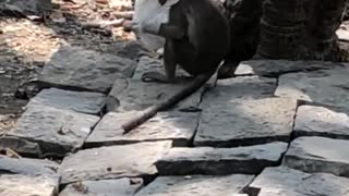 Monkey gets stuck in white net - Video