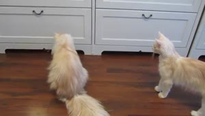 Kitten safely hides from bigger cats - Video