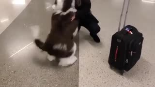 Ecstatic dog can't hold his bladder when reunited with owner at airport