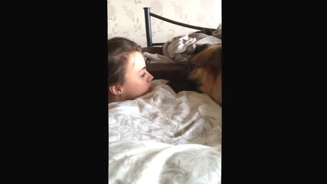 German Shepherd Whines To Owner About Her Bad Day  - Video