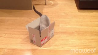 Two cats one box - Video