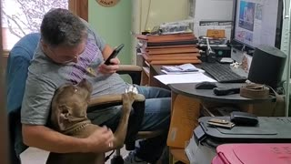 "Dog And Owner Listen To ""That's Amore"" Together"